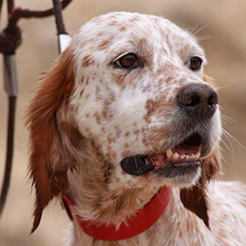 Las Federaciones de Caza y el PP en contra de la Ley de Protección Animal de La Rioja