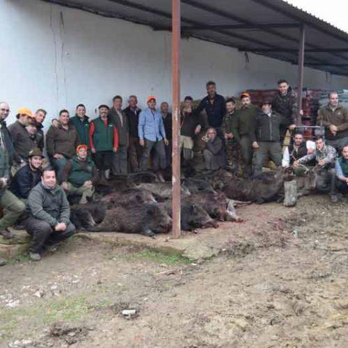 Los jabalíes dieron mucho juego en la montería El Puntal