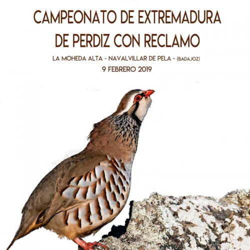 XXII Campeonato de Extremadura de Perdiz con Reclamo