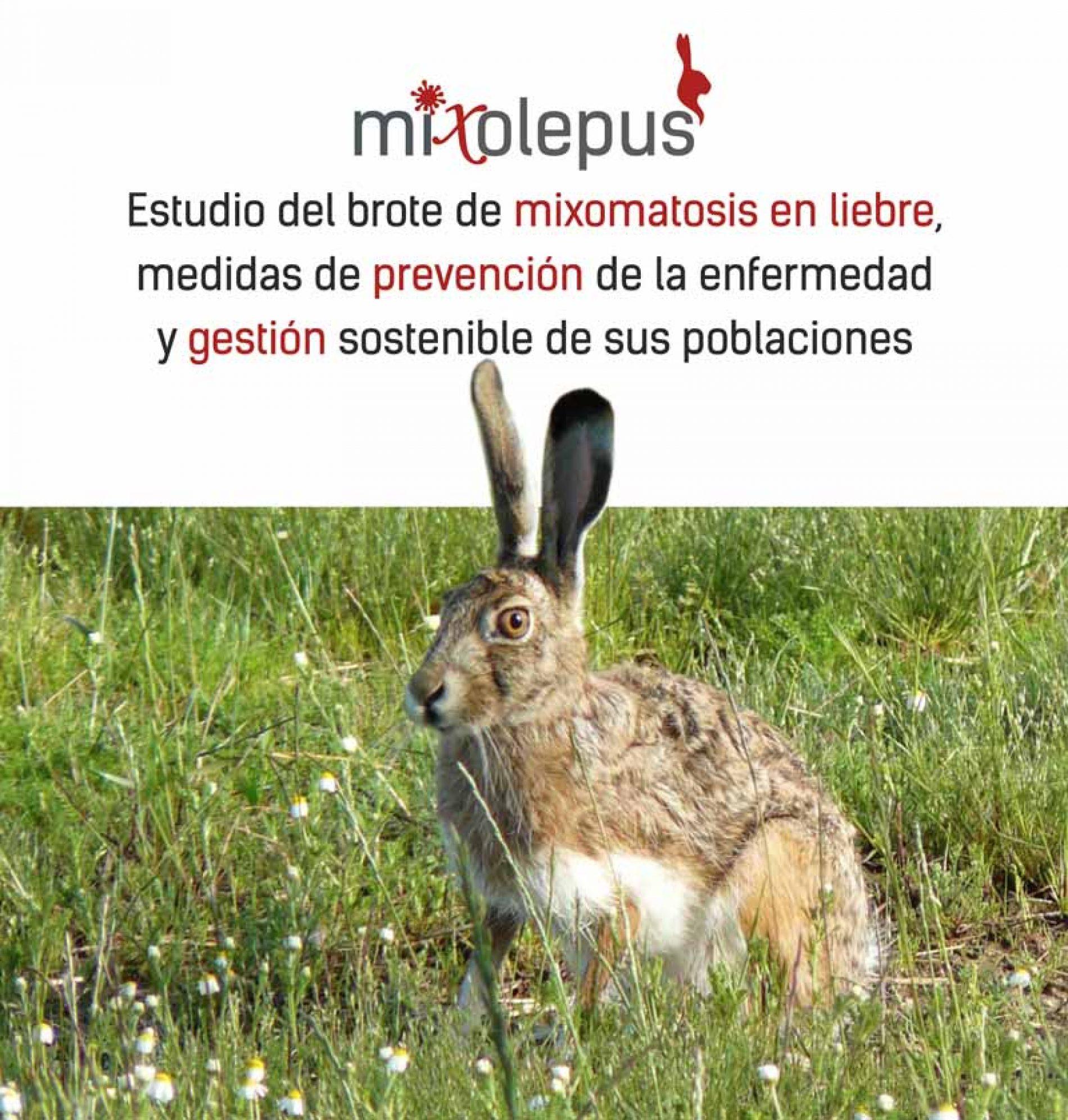 Nace 'MIXOlepus, para conocer el impacto de la mixomatosis en la liebre y proponer soluciones