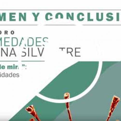Video Resumen y Conclusiones. Foro de Enfermedades de la Fauna Silvestre