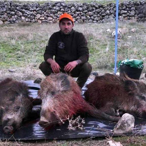Más de 15 jabalís se quedaron en el monte para alimento de los buitres en El Asperón