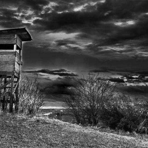 La situación de la caza en Castilla y León: su presente y su futuro inmediato
