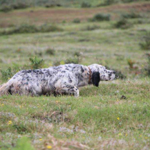 Podemos prepara una proposición de Ley de Protección Animal en Euskadi