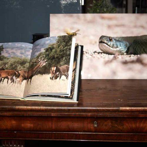 Fundación Asisa publica el primer libro de fotografías de José María Finat