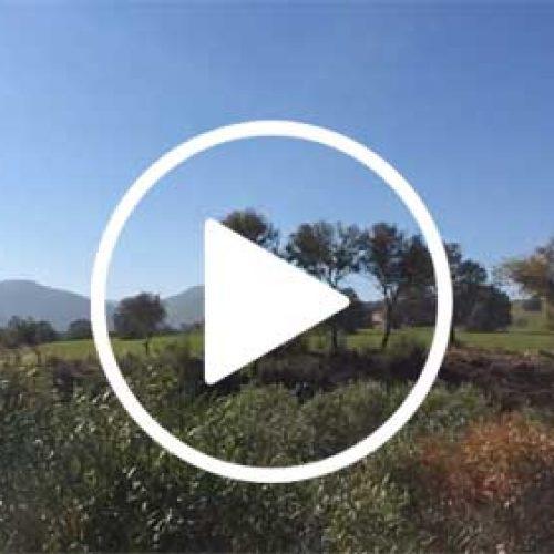 Video, Ojeo de Perdiz en Fresnedas Altas