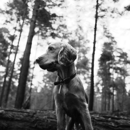 Artemisan pide a El País que rectifique el uso de datos falsos sobre el abandono de perros