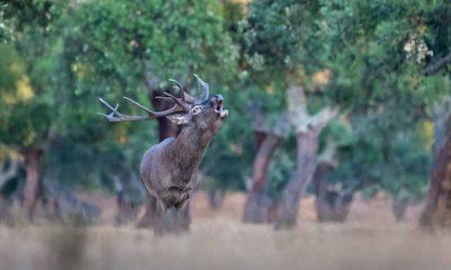 Federación Extremeña de Caza y APAG Extremadura Asaja por la revalorización de la dehesa extremeña