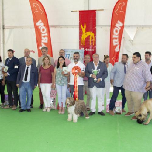 """""""Alma"""" un perro de agua español ganador en la XXVII Feria del Perro de Archidona"""