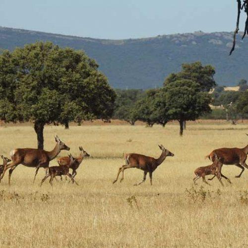 Artemisan presenta alegaciones al Plan Rector del Parque Nacional Cabañeros