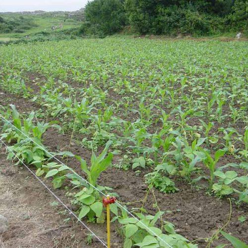 La gestión de los daños a la agricultura por la fauna cinegética debe implicar toda la sociedad