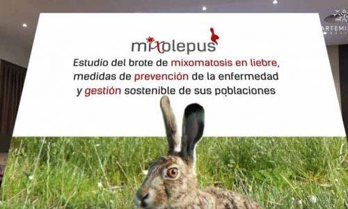 El proyecto 'MIXOlepus' lanza un vídeo sobre las últimas investigaciones del brote de mixomatosis