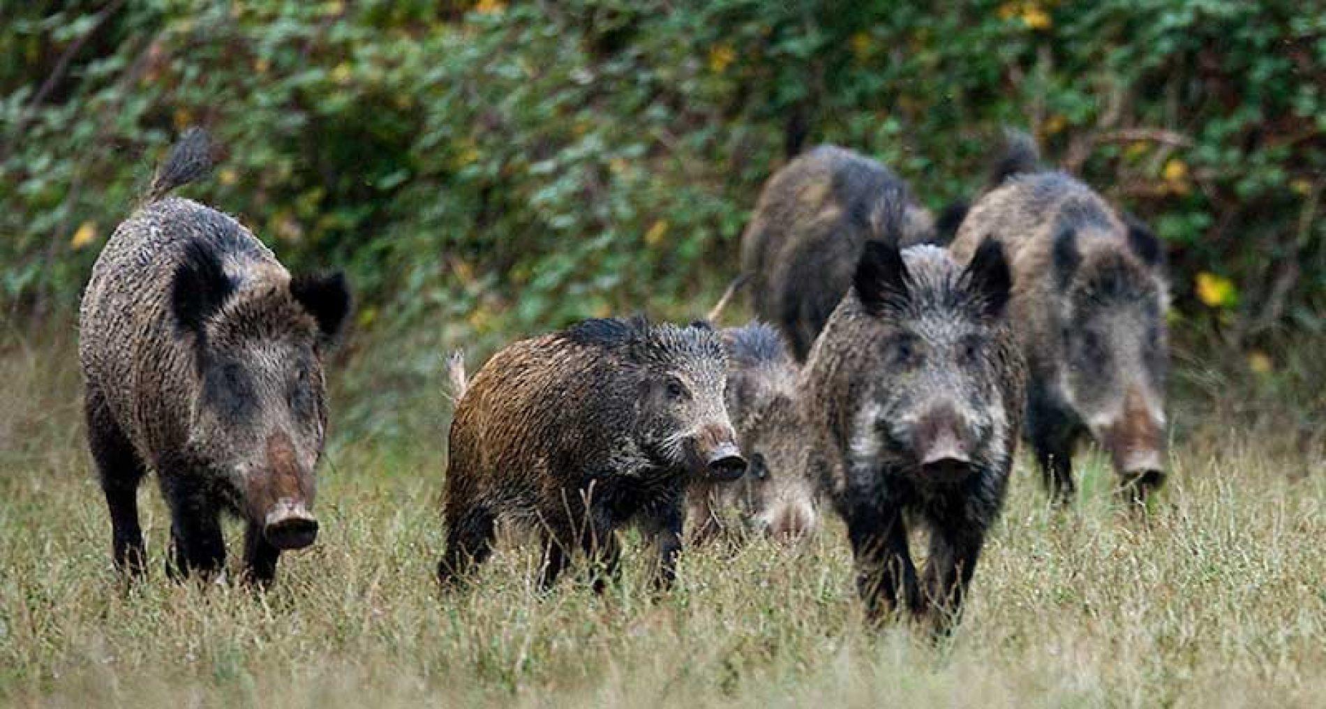 La RFEC y el MAPA trabajan contra las enfermedades que afectan a la fauna