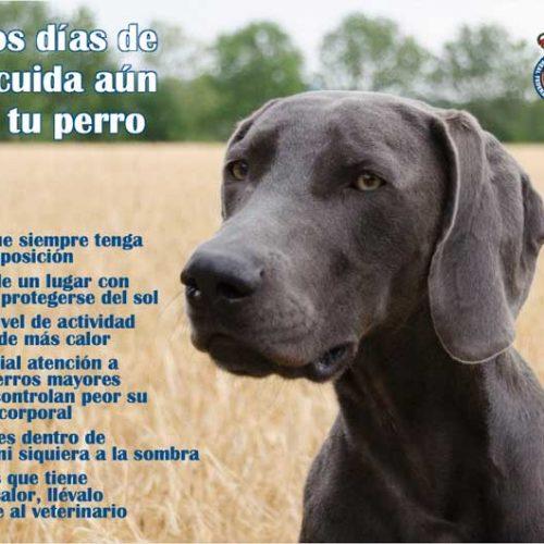 Cuidado con los perros, ante los días de calor que se aproximan