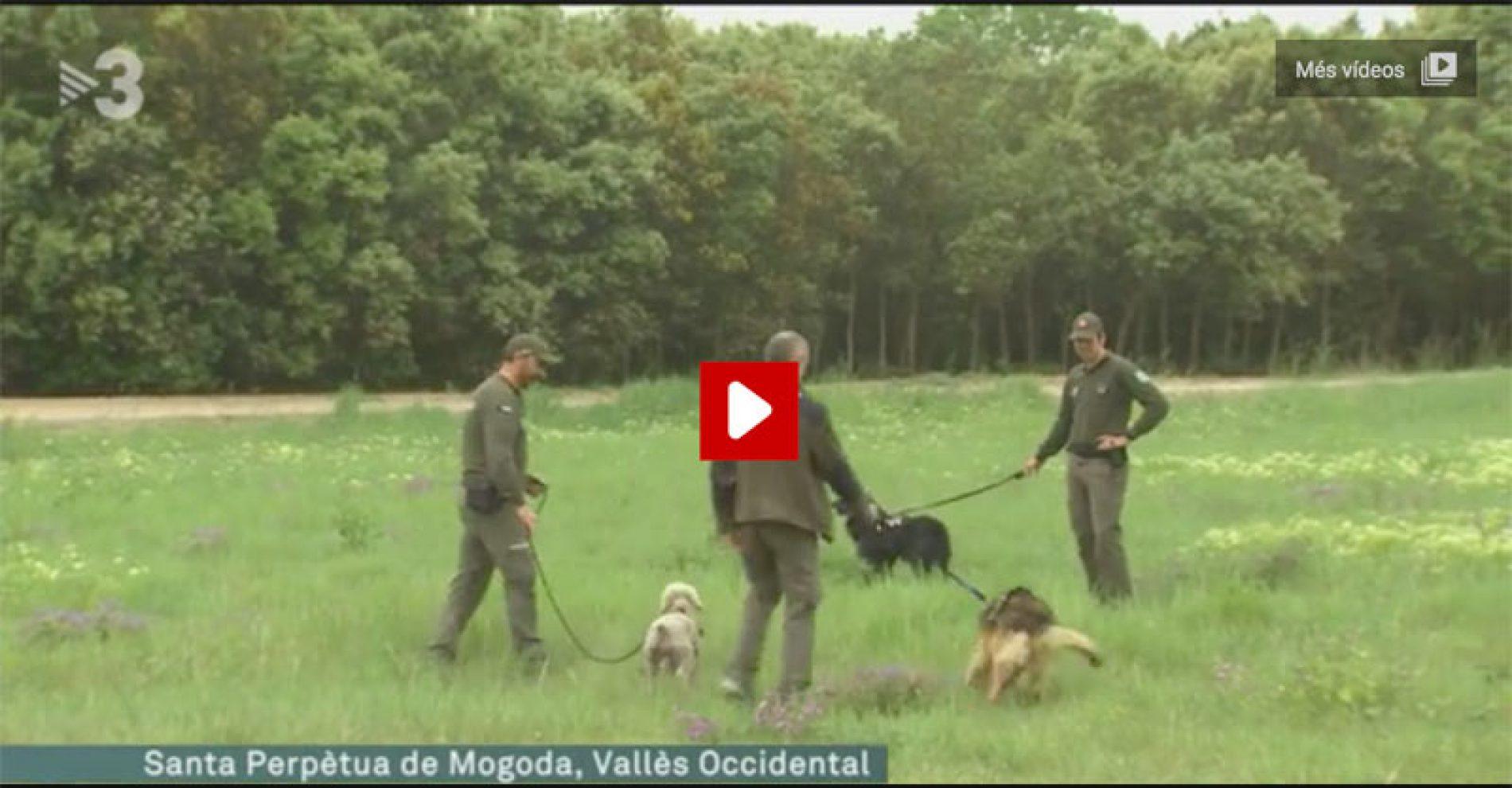 Tv3, una vez más, emite una noticia con un comentario falso sobre los cazadores.