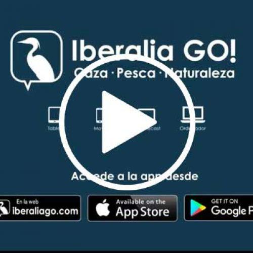 En Verano Iberalia GO !, la App de Iberalia Tv y disfruta de los mejores documentales de caza