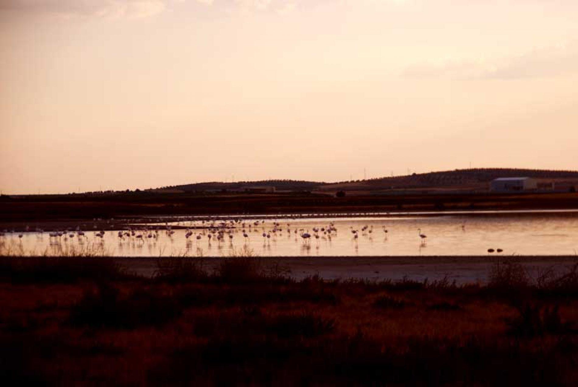 Cinegética 2020… Turismo fotográfico cinegético, ornitológico y de naturaleza