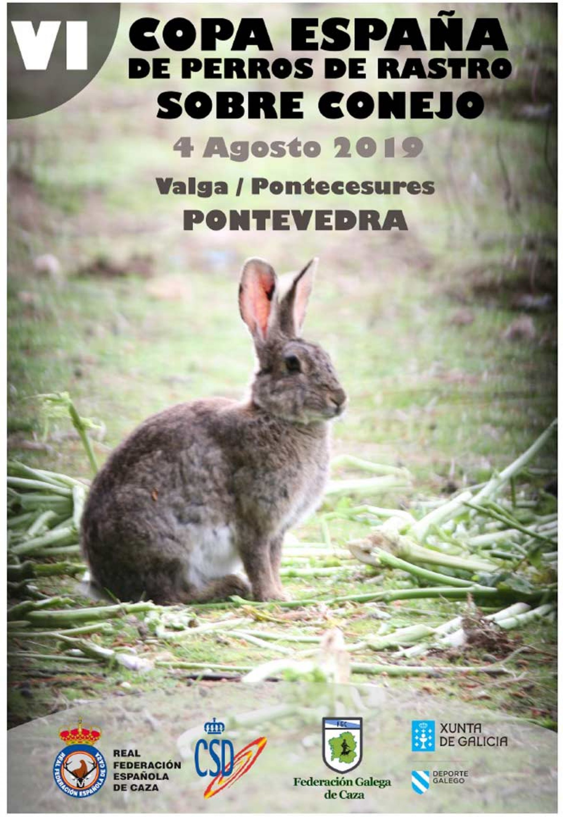 VI Copa de España de Perros de Rastro sobre Conejo