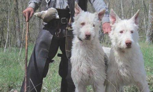 La Comunidad de Madrid confirma a ARRECAL que autorizará el enterramiento de los perros de rehala