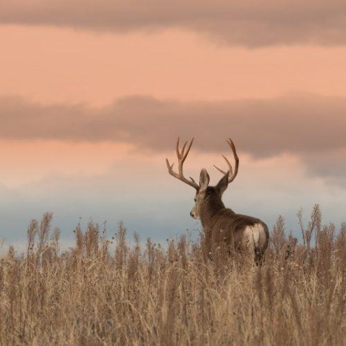 La carne de caza cumple las recomendaciones de la ONU en la lucha contra el Cambio Climático