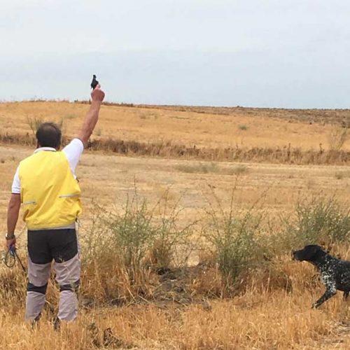 """""""Jenio de Iztingorri"""" y """"Kiko de Osan de Sira"""", campeones de España de Caza Práctica – Perros de Muestra"""