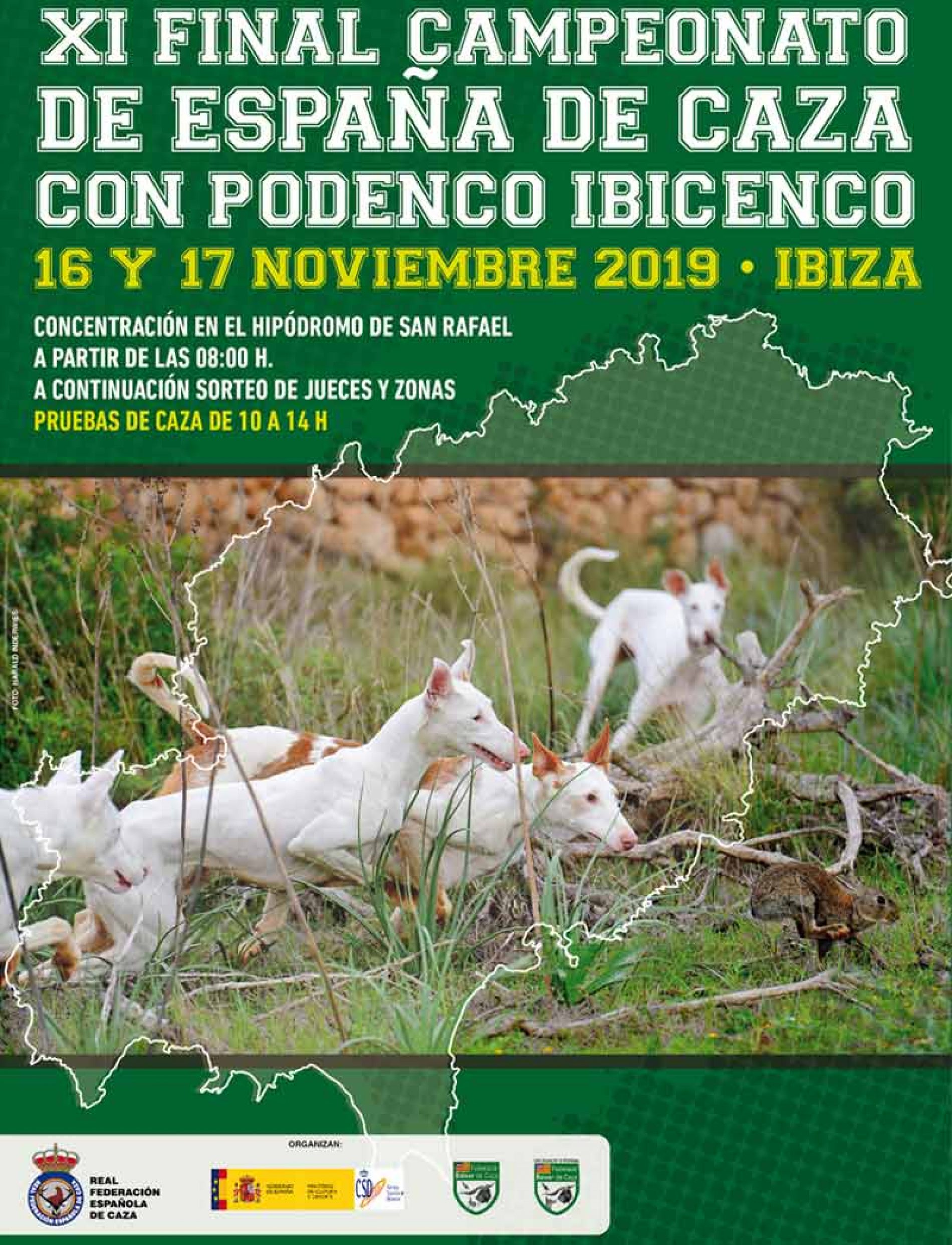 Abierto el plazo de inscripción para el XI Campeonato de España de Caza con Podenco Ibicenco