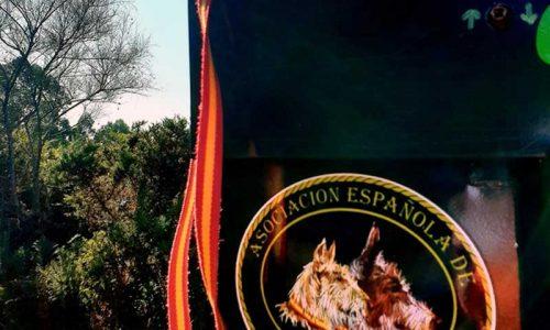 Novedades en materia de transporte de rehalas Real Decreto 638/2019