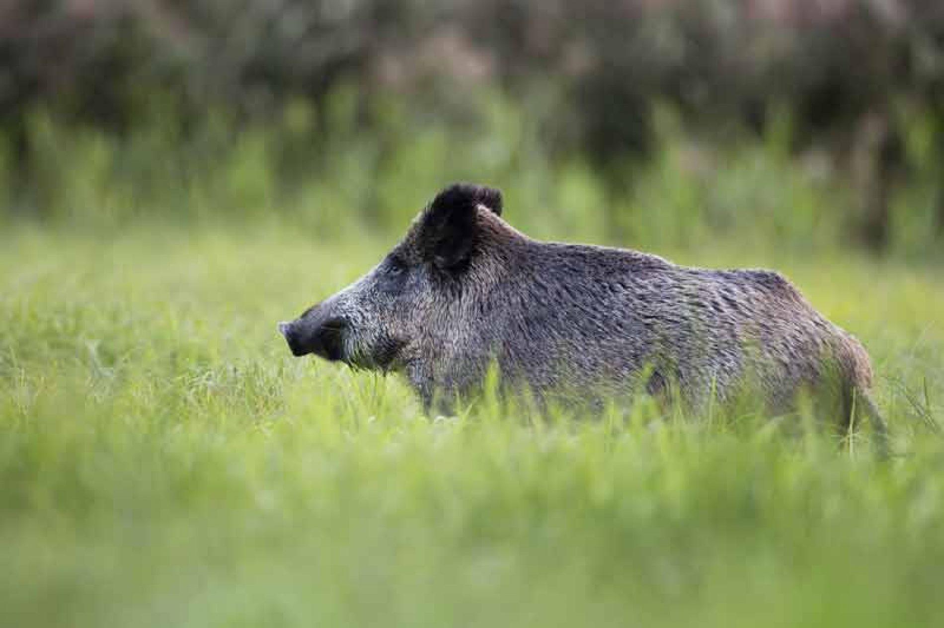 La aplicación de un decreto sin sentido ocasiona graves perjuicios a las sociedades de cazadores
