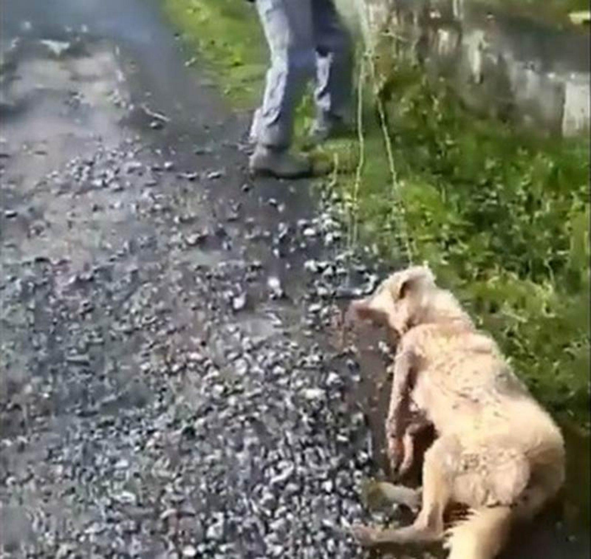 La RFEC presenta una querella por maltrato animal contra el individuo que ha agredido a un perro en Lugo