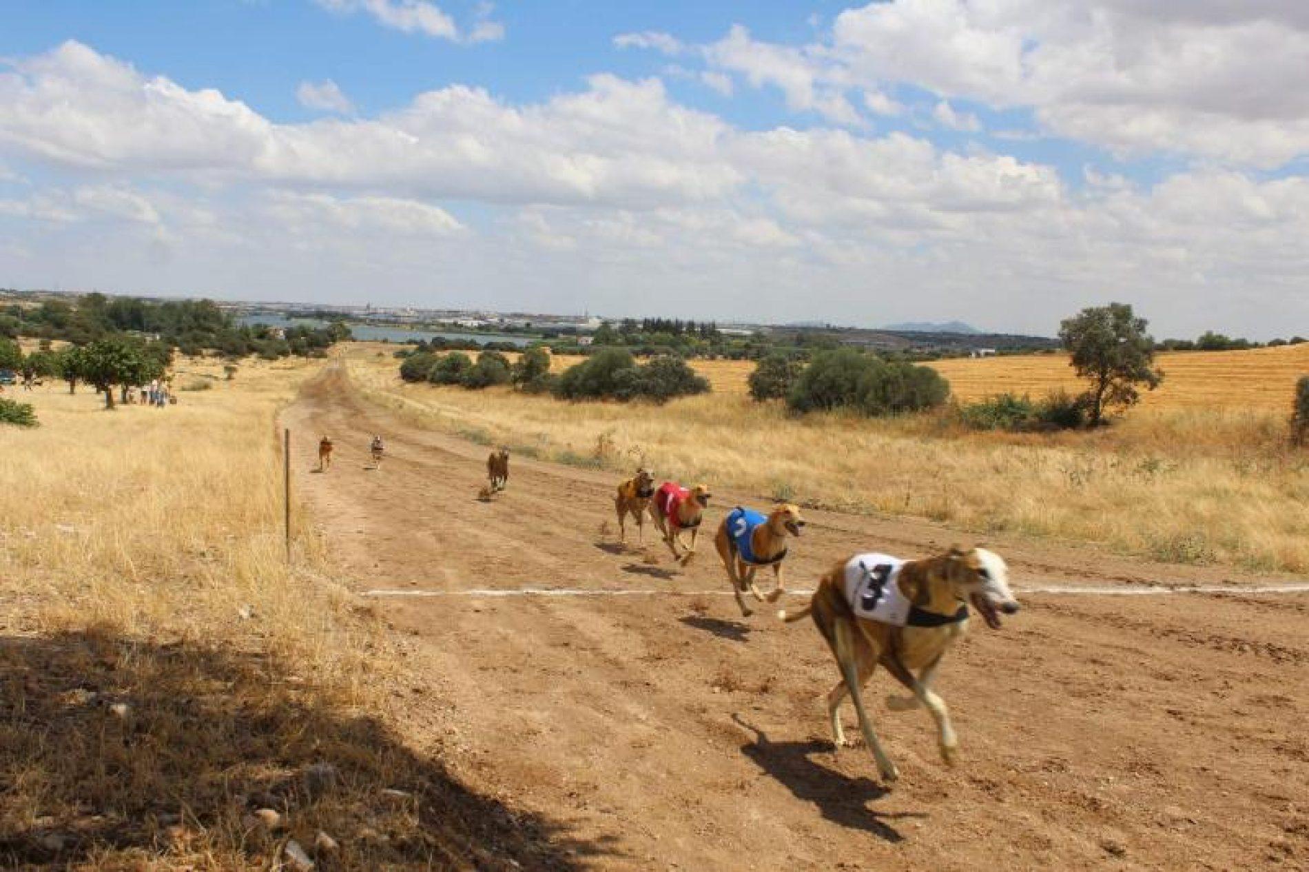 FEDEXCAZA lanzará una liga de competición de carreras de galgos con liebre mecánica