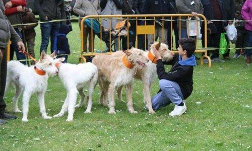ARRECAL lleva a los tribunales a una protectora de animales de Tarragona por la apropiación del perro de uno de sus rehaleros
