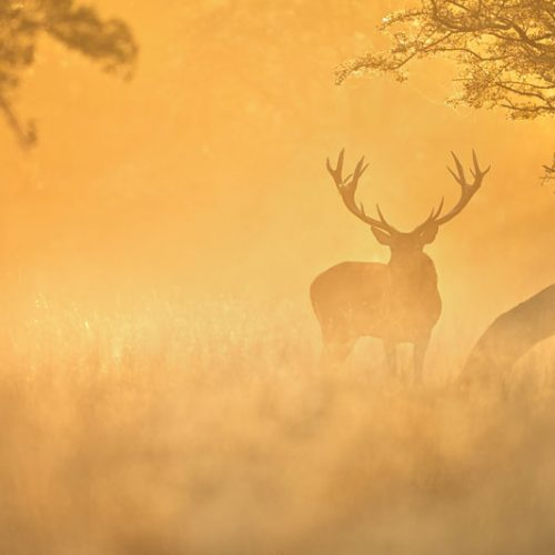 Poniendo en valor a la caza