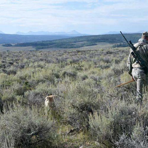 La RFEC presenta a Sanidad un protocolo de práctica segura de la caza para la Fase I