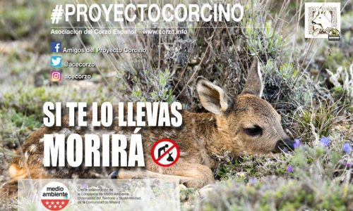 """La Asociación del Corzo Español pone en marcha la XXII campaña """"proyecto corcino""""."""