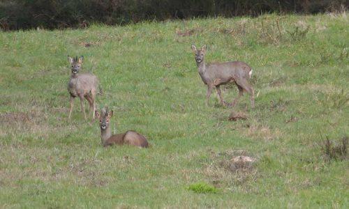 ATEGAL miente para injuriar a la federación galega de caza