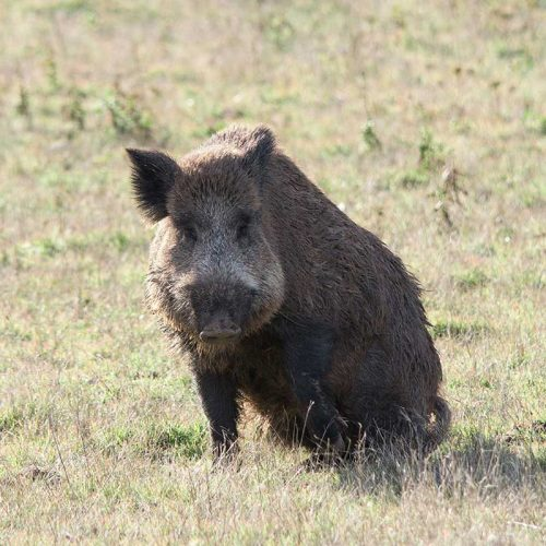 Ecologistas en Acción aprovecha el debate sobre los períodos hábiles de caza para pedir subvenciones