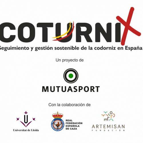 Nace 'Coturnix', un proyecto de ciencia ciudadana aplicada a la conservación de la codorniz