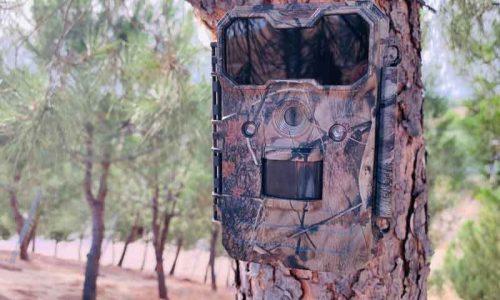 5 Consejos para comprar tu cámara de caza