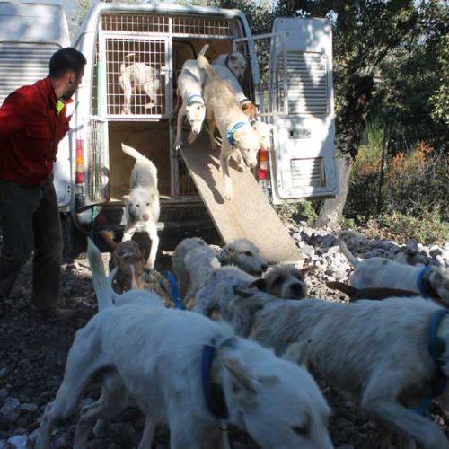 Propuestas de la asociación española de rehalas al nuevo reglamento de núcleos zoológicos