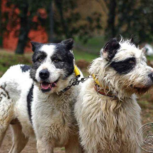 La asociación española de rehalas contra la apropiación indebida de perros de caza