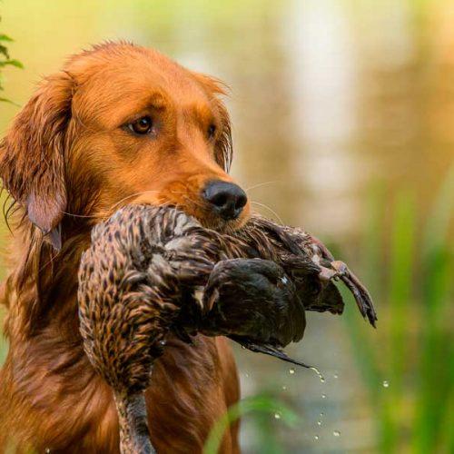 Movilidad de cazadores para asistir a sus perros y practicar el deporte de la caza