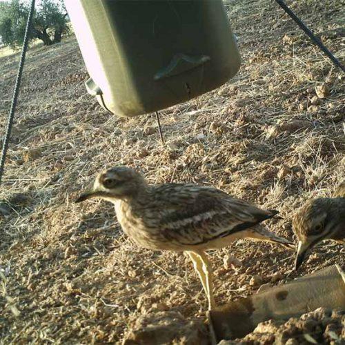 ¿En qué medida utilizan las especies no cinegéticas los bebederos y comederos dirigidos a la caza menor?