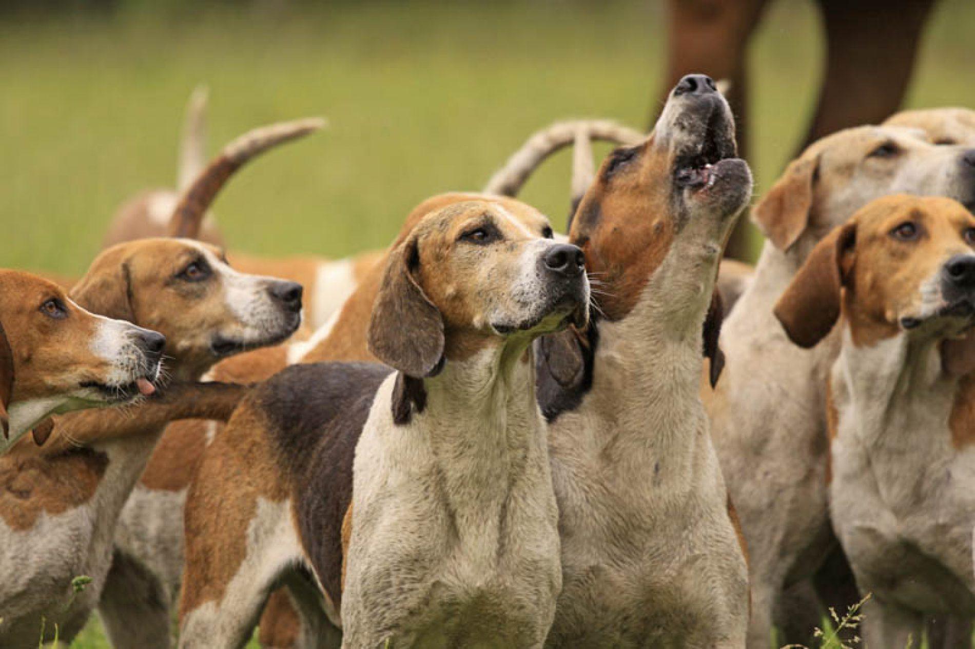 La RFEC presenta sus propuestas a la futura Ley estatal de Bienestar Animal