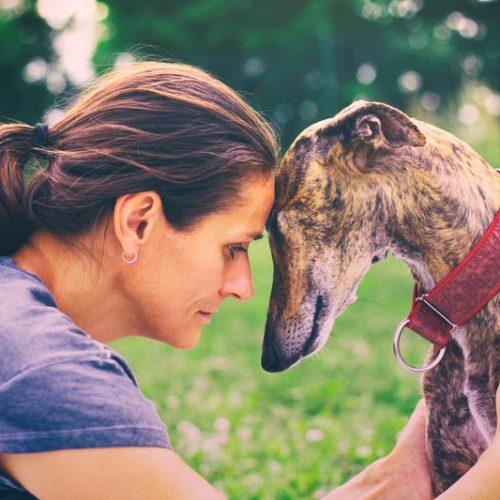 El estudio de Affinity vuelve a desmontar las mentiras animalistas sobre el abandono de perros de caza