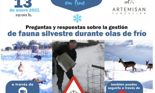 Seminario Preguntas y respuestas sobre la gestión de fauna silvestre durante olas de frío de Fundación Artemisan