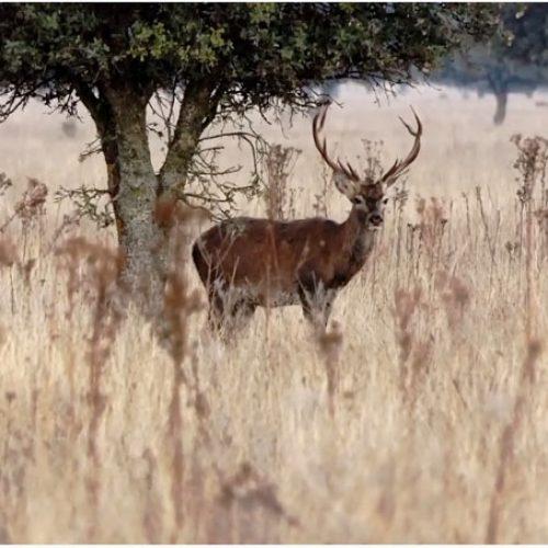 Fundación Artemisan advierte que una nueva paralización en la caza pueden ser devastadoras