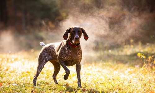 La RFEC y el CCBP firman un acuerdo para potenciar la modalidad de Perros de Muestra en Montaña
