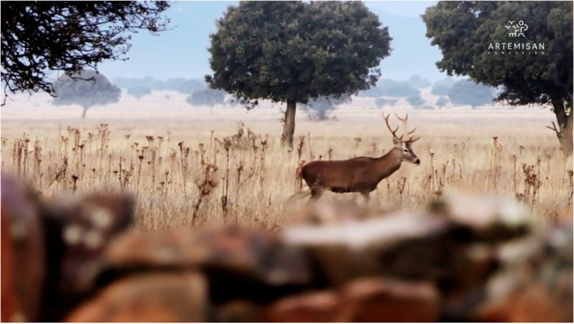 La Covid-19 provoca un descenso de los permisos de caza expedidos en 2020