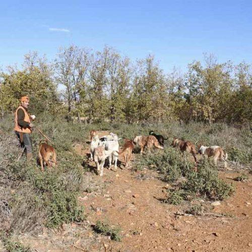 ARRECAL avisa de que la sobreprotección del lobo aumentará los ataques a perros de caza y ganado