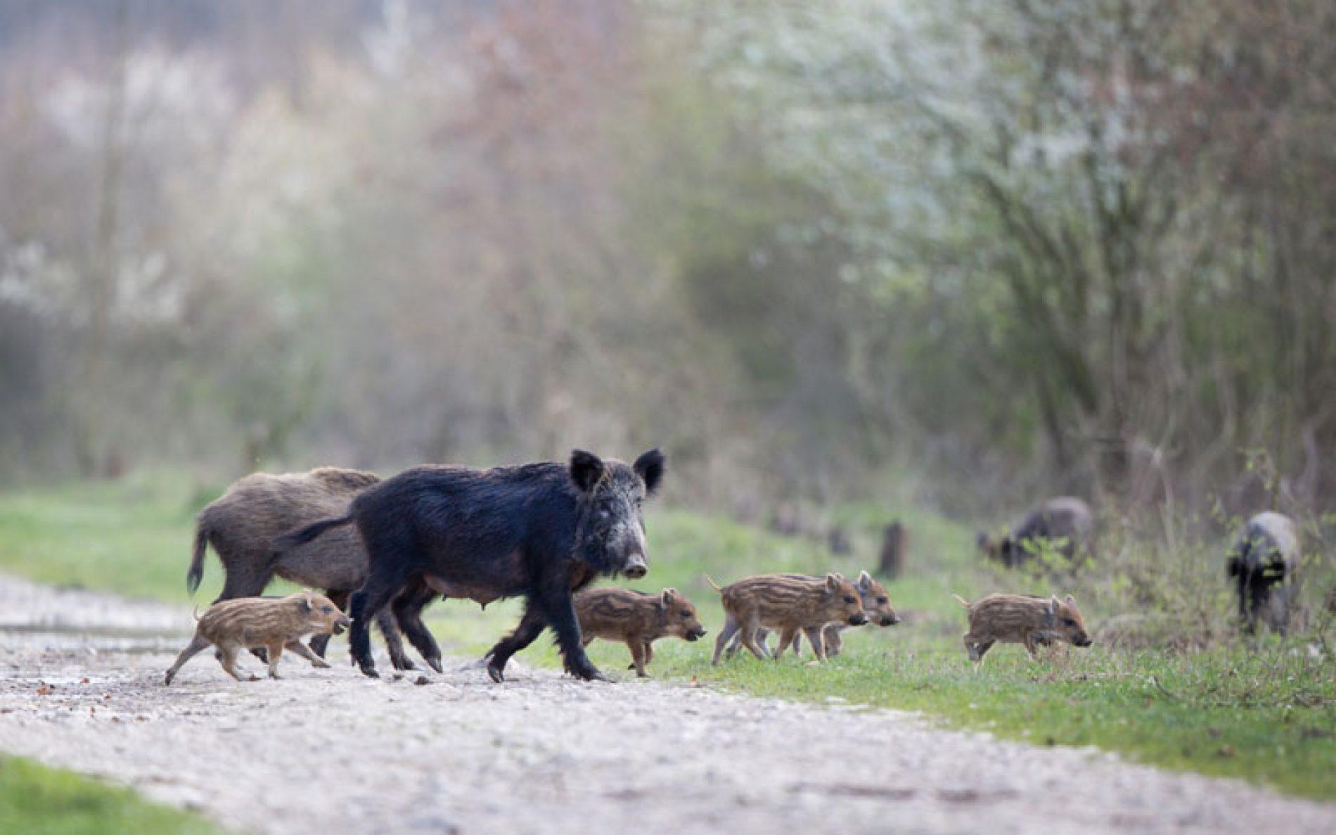 FECA-CV y ADECACOVA piden ayudas a la Generalitat Valenciana para paliar la sobreabundancia de especies